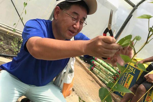 Un Japonais spécialiste du bouturage de l'igname