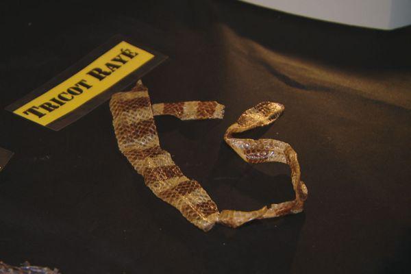 tricot rayé mue