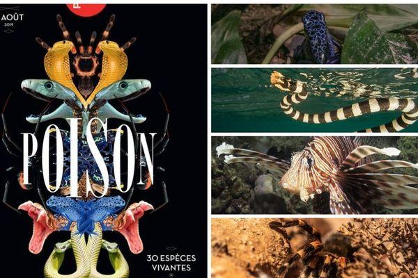 Venimeuses et vénéneuses, percez les secrets de ces espèces qui peuplent l'Outre-mer