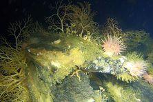 Deux épaves en bois situées entre 100 et 110 m de profondeur ont été retrouvées par les équipes de recherche.