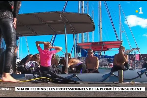 Shark Feeding : un prestataire jugé le 9 juin prochain