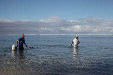 Pêcheurs traditionnels aux capucins carême dans le lagon de la Saline les Bains