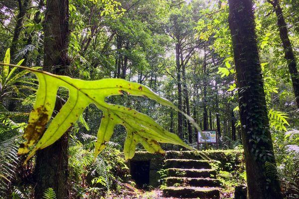 Réserve biologique de la forêt de Bois de couleur Basse Vallée saint-philippe