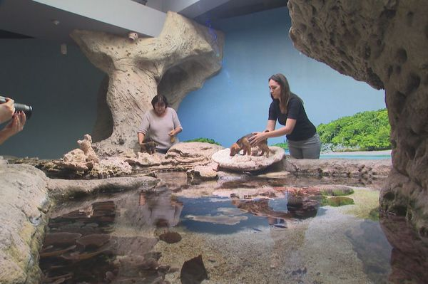 Chiot, shooting photo de la Spanc à l'aquarium, mai 2020