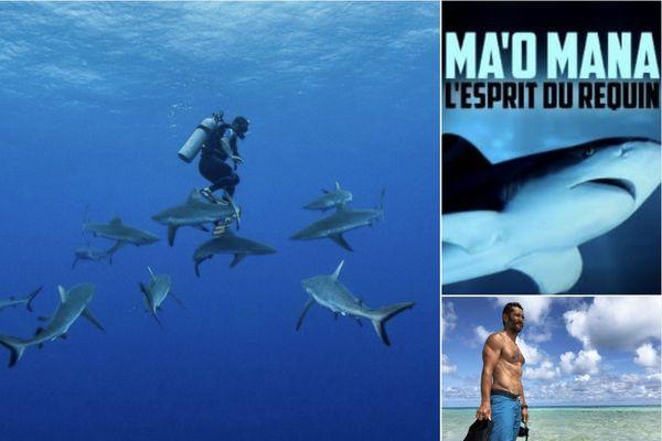 """Bixente Lizarazu : """"la Polynésie française, c'est le plus bel endroit au monde pour découvrir les requins"""""""
