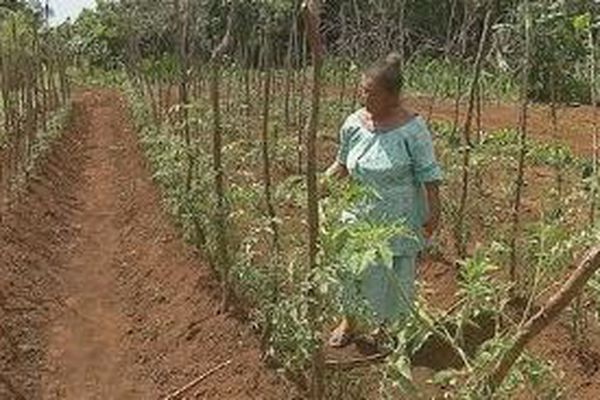 Monika teste le produit sur les feuilles de tomates