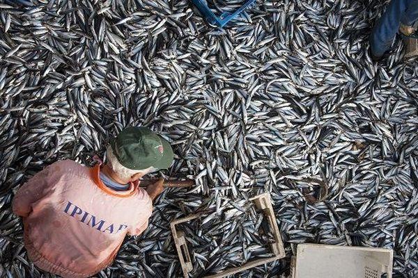 Un rapport parlementaire préconise 27 mesures pour une pêche durable