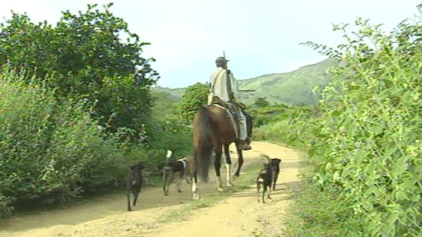 Scène de chasse avec cheval et chiens