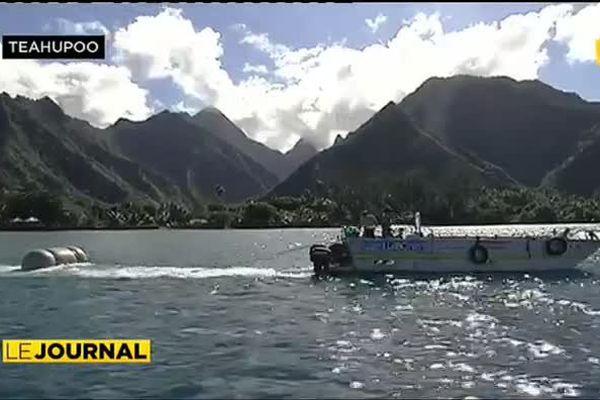 Teahupoo protège ses ressources halieutiques