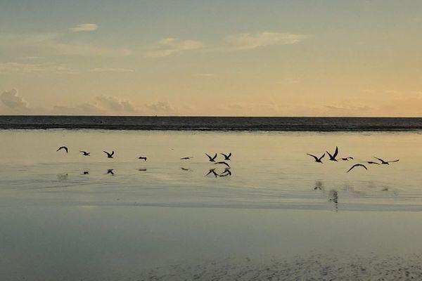 Oiseaux au petit matin