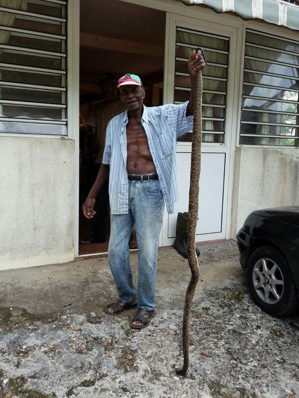 serpent photo intégrale