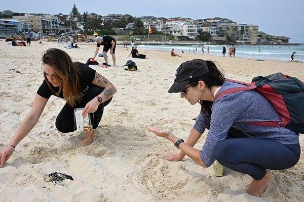 Nettoyage de la plage Bondi à Sydney