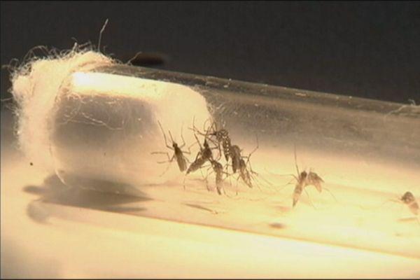 Epidémie de dengue en Guyane