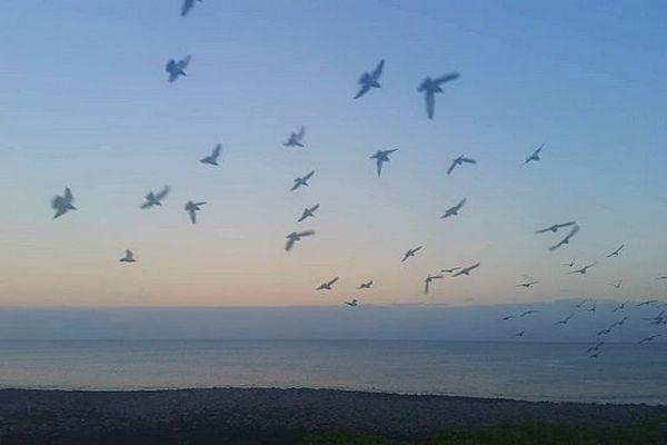 oiseaux plage de Saint-Paul