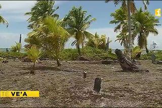 Huile de coco vierge : le trésor de Niau