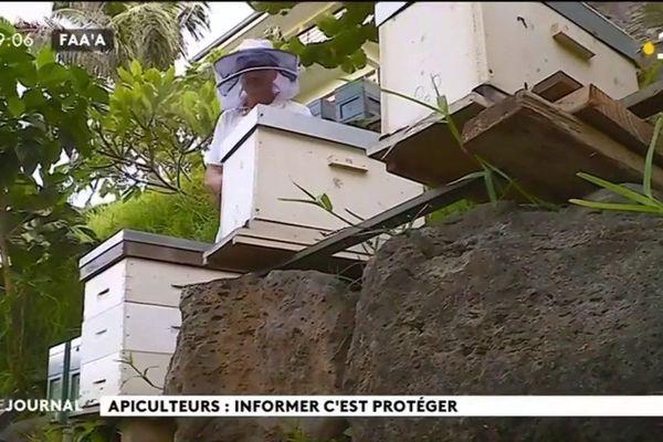 Pulvérisations anti dengue : les apiculteurs inquiets