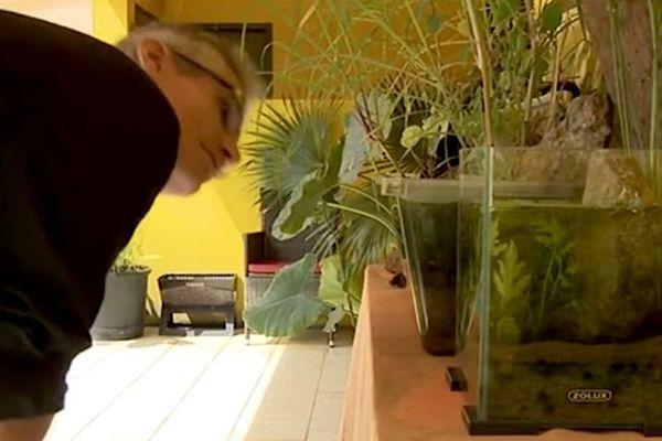 Roura : à la découverte du gîte Héliconia d'aquariophilie