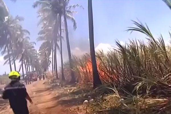 Incendie de champ de cannes