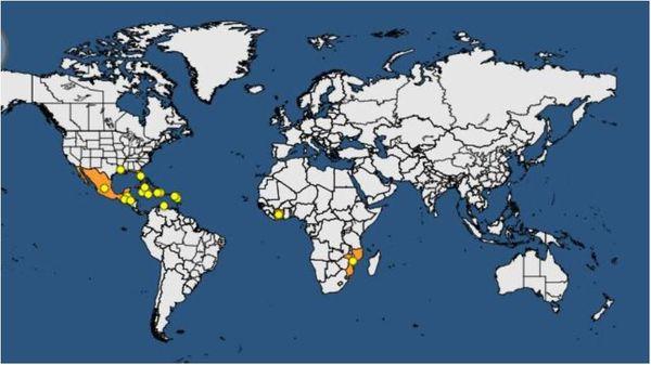 Répartition du jaunissement mortel du palmier (OEPP database)