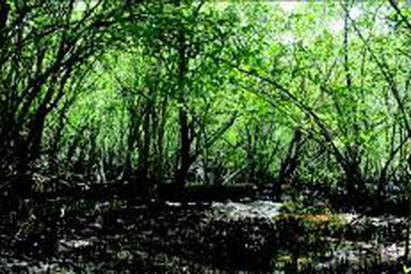Forêt tropicale humide nettoyée