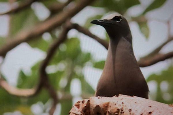 illustre oiseau