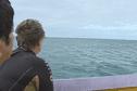 Une sortie baleine tourne mal à Moorea