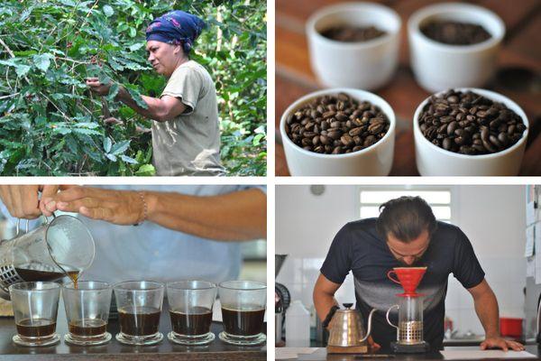 Le café calédonien sous toutes ses facettes