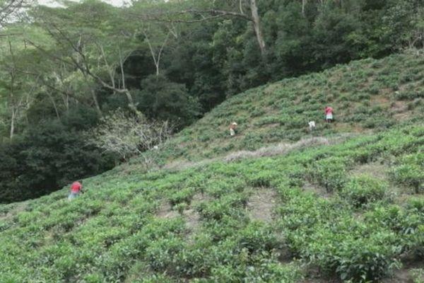 20161028 The aux Seychelles