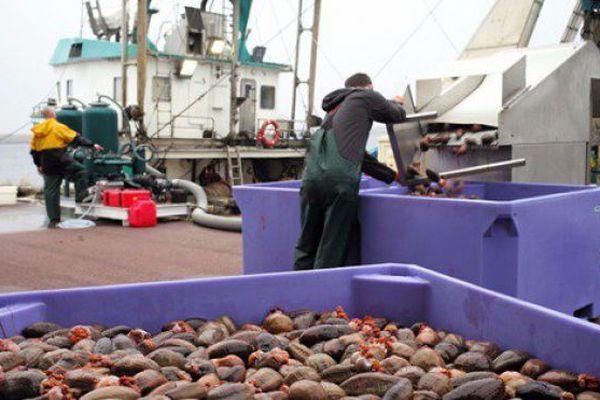 concombre de mer peche