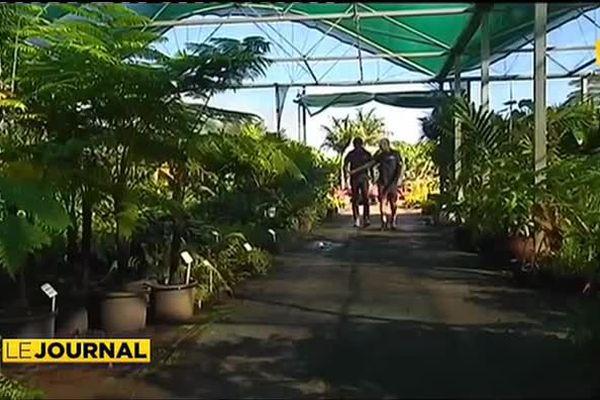 Sauver la flore locale en l'intégrant aux chantiers publics