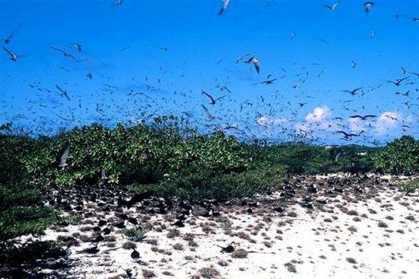 Sterne sur l'île de Desnoeufs aux Seychelles