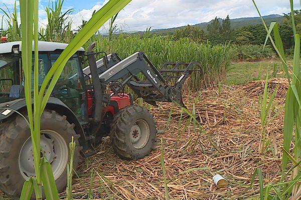 Tracteur champ cannes