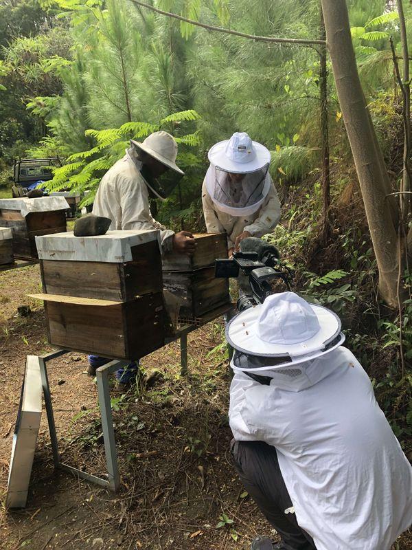Ça pousse au fenua - L'apiculture au naturel