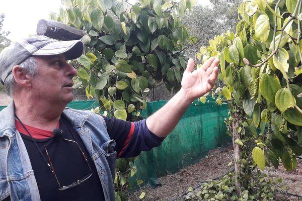 Le champ de poivre de Franck Le-Nôtre