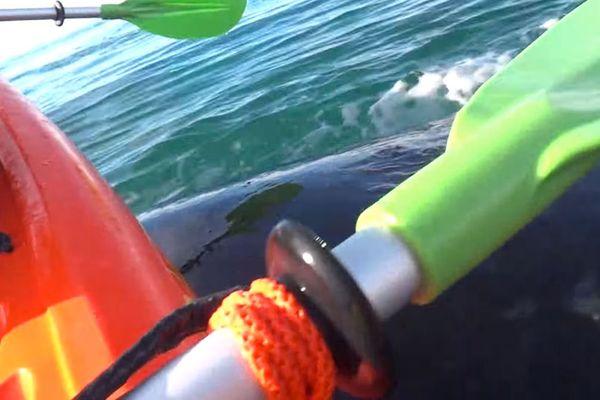 La baleine soulève le kayak pendant quelques instants