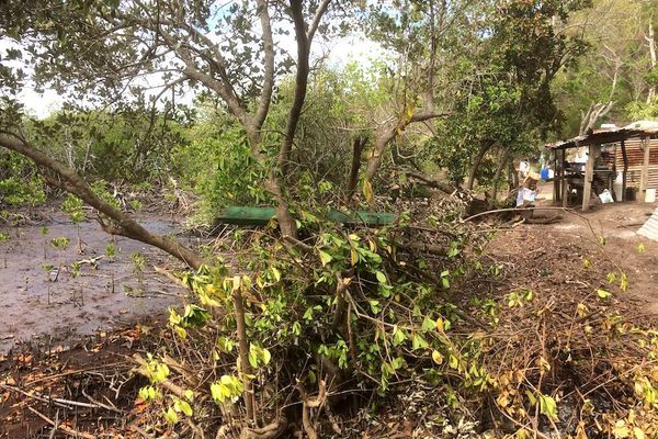 Après la pollution de la mangrove au pic aux Morts, février 2020