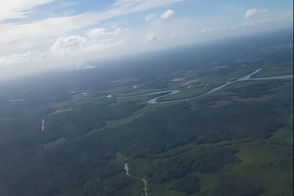 Forêt Guyane