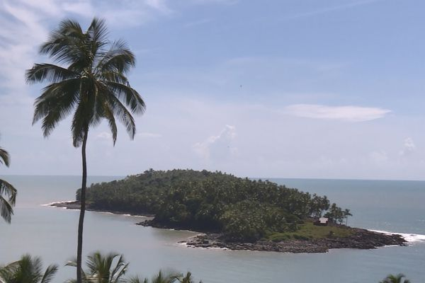 Les Îles du Salut incommodées par des singes envahissants