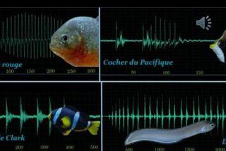 Les sons émis par les poissons
