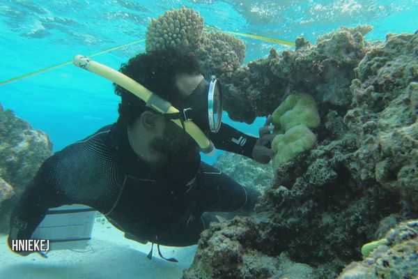 Réseau d'observation des récifs coralliens, station de Hniekej à Mou, Lifou