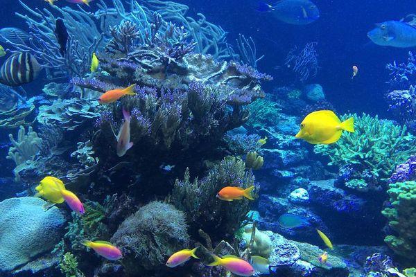 Un jeu pour protéger les ressources marines