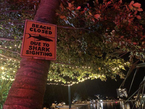 alerte requins baie des citrons