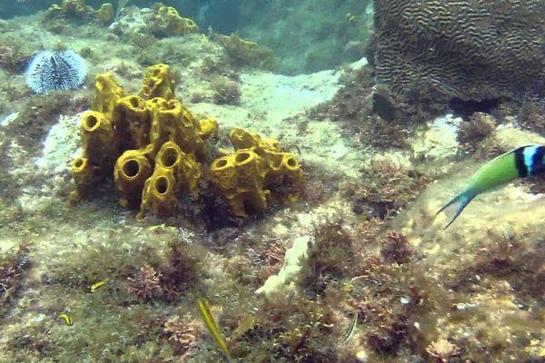 fond marin Guadeloupe
