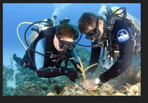 Cuba reproduction des coraux