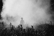 L'indemnisation des victimes des pesticides enfin mise en oeuvre.