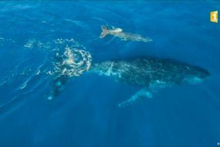 20160819 Baleine