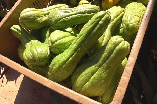chaleur et prix des légumes chouchou marché du Chaudron 100319