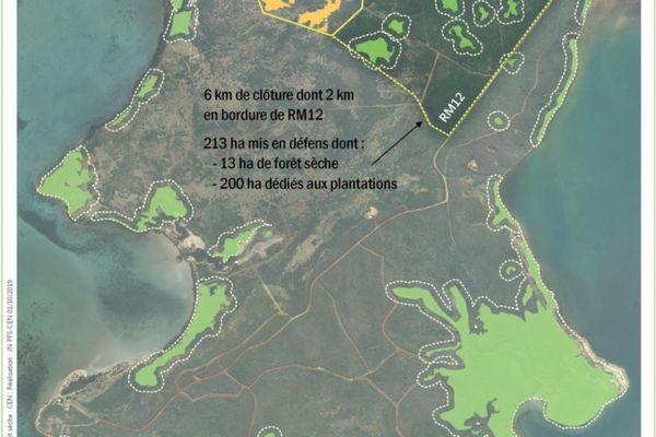 Un nouveau site de forêt sèche protégé sur la presqu'île de Pindaï