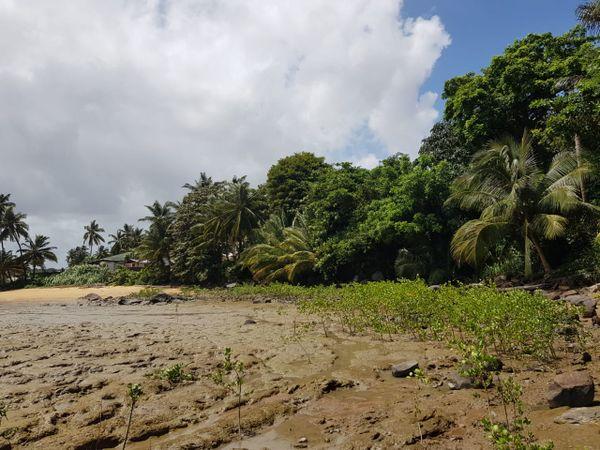 Foncier : un permis de construire contreversé sur le littoral de Bourda