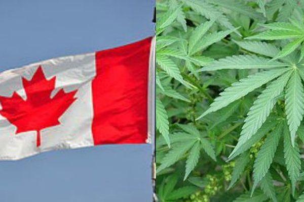 Le Canada est le premier pays du G7 à légaliser l'usage récréatif du cannabis